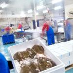 Ryby w pojemniku izotermicznym ze styropianu